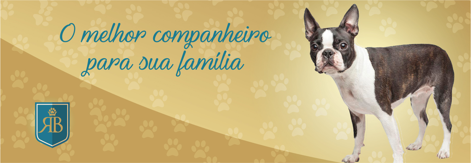 Boston Terrier Brasilia