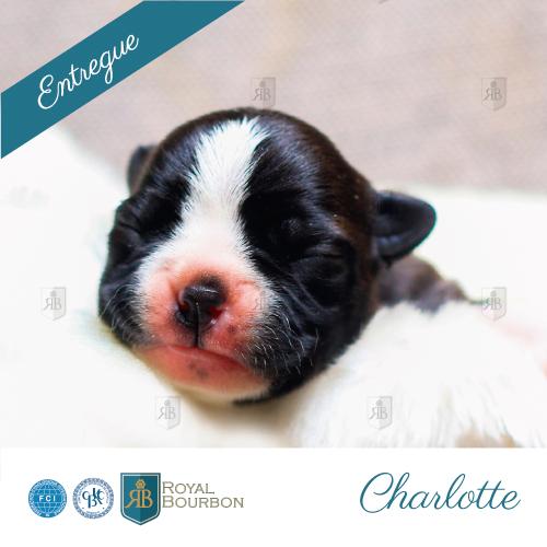 charlotte-boston-royalbourbon3
